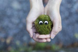 Twee handen die een hoopje gras vasthouden waarin twee oogjes zitten